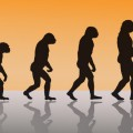 evolution-humanite