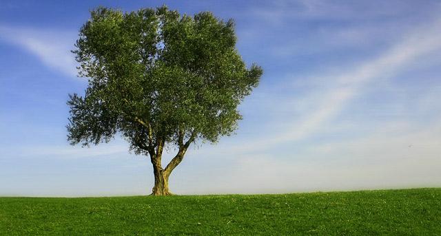 Une nouvelle écologie pour une nouvelle humanité