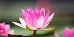 La Rose-Croix, un appel à la bienveillance